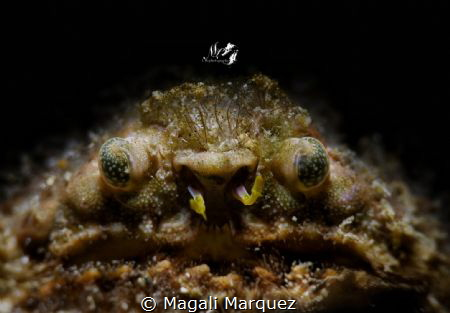 Grumpy old man 😁