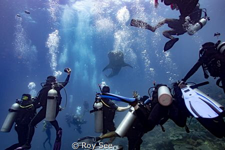 Four separate groups of divers bumped into each other at ... by Roy See