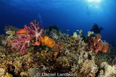 The wonderful, healthy reefs of Misool! by Daniel Lamborn