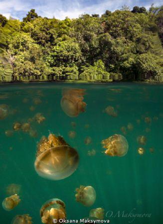 Jellyfish lake, Kakaban Island by Oksana Maksymova