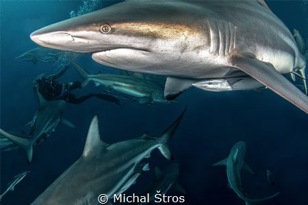 Surrounded by sharks by Michal Štros