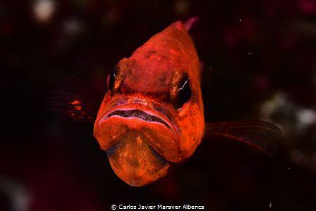 Fotografía realizada en inmersión del embarcadero de Cala... by Carlos Javier Maraver Albenca