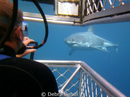 Great White Shark-Cage Diving with Calypso Star Charters ... by Debra Cahill