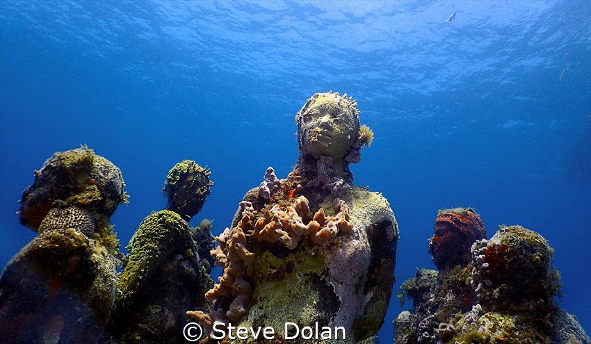 """Garden of Souls"" by Steve Dolan"