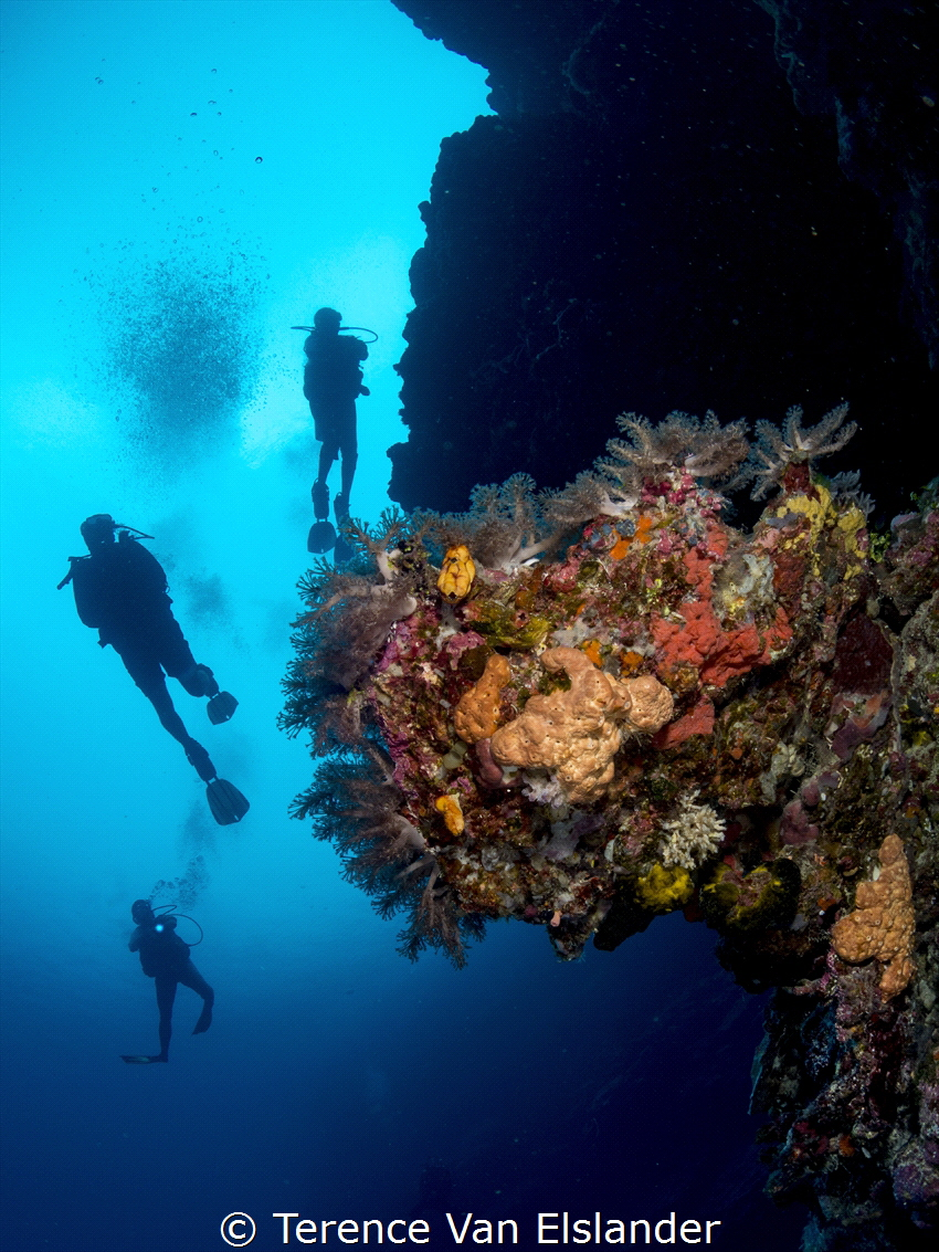 Taken in November 2019 off of Munda, Solomon Islands with... by Terence Van Elslander