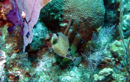 Photo taken 08/12/2006 at East end of Grand Cayman with a... by Bonnie Conley