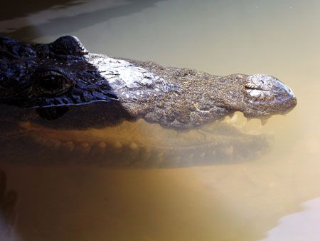 The resident croc at our local marina. by Martin Spragg