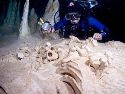 Giant sloth bones in kolimba cave by Becky Kagan