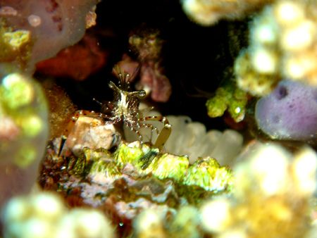 Taken at Dibba Rock - surely one of the best dive sites i... by Dan Lee
