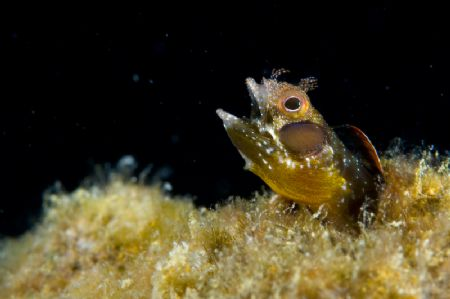 """Burp""