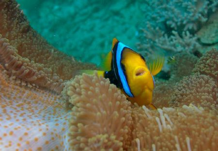 Angry Nemo - Canon 350D/20mm/Ike DS-125 X 2/HID Light Can... by Dallas Poore