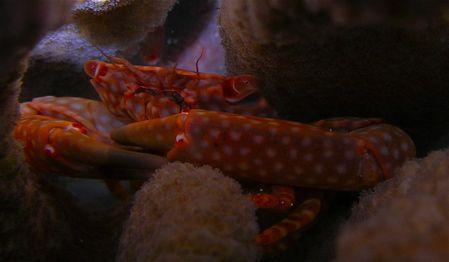 crab nikon 5900 by Elizabeth Chase