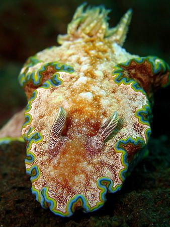 Colorful Nudi! Taken In Tulamben With Canon S80. by Ed Eng