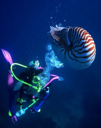 Diver with a Nautilus, photo taken at Manado, Indonesia. by Steve Kuo