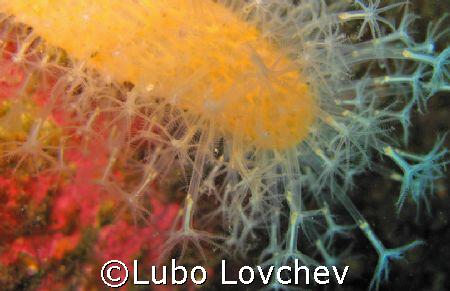 Dead man's fingers by Lubo Lovchev