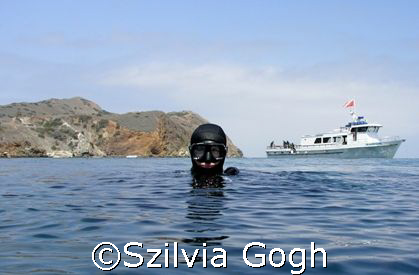 Divers returning to Catalina Island after the fire in May... by Szilvia Gogh