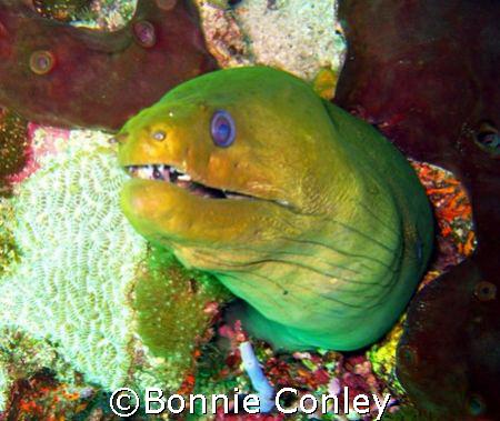 Moray eel seen in Tobago June 2007.  Photo taken with a C... by Bonnie Conley