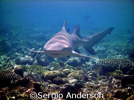 Smile.... yes i'm a lemon shark by Sergio Anderson