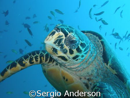 turtle .... by Sergio Anderson