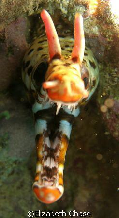 dragon, outside kewalo basin, secret reef by Elizabeth Chase