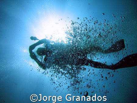 Diving in Rosario Island by Jorge Granados