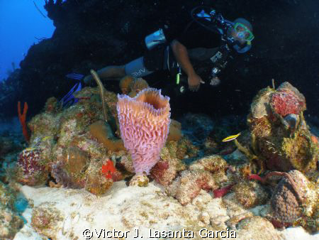 my buddy rodney in the new dive site in parguera wall.... by Victor J. Lasanta Garcia