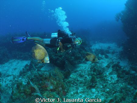 flying high in the reef in parguera wall!!!!! by Victor J. Lasanta Garcia