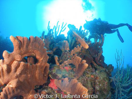 parguera beatiful dive site!!!!!!!! come and dive!!! by Victor J. Lasanta Garcia 