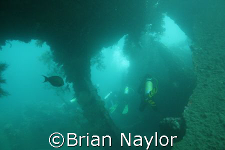"""""""Diving in line"""" US liberty by Brian Naylor"""