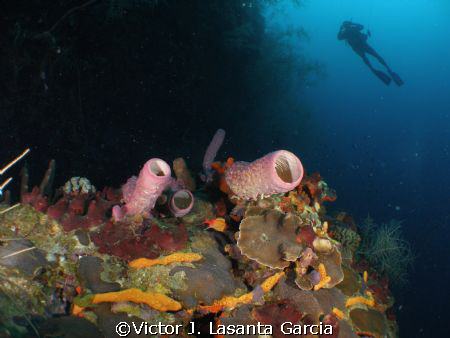 nice view at v.j.levels dive site of parguera wall,one of... by Victor J. Lasanta Garcia