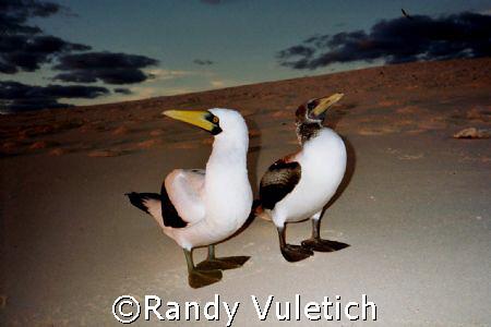 oly s800 by Randy Vuletich
