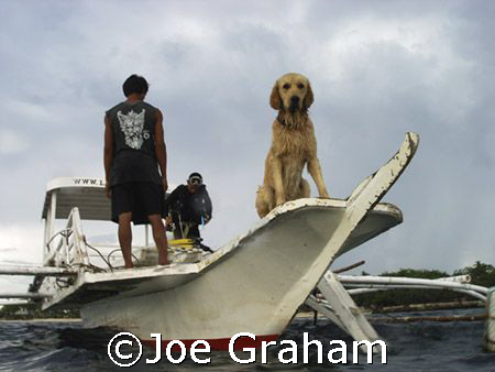 Dive center dog waiting on the boat as the divers return ... by Joe Graham