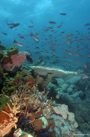 Eden Rediscovered at Verdy Island by Gary Stokes