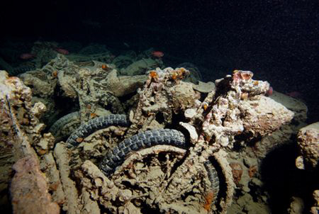 Motorcycles on the Thistlegorm. by Dray Van Beeck