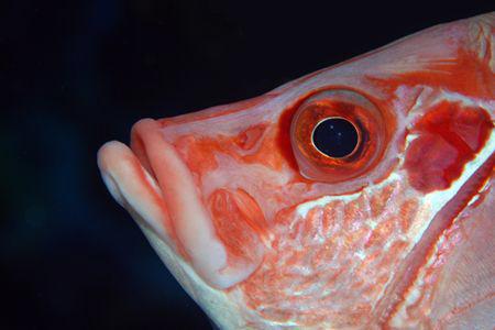fish by Dray Van Beeck