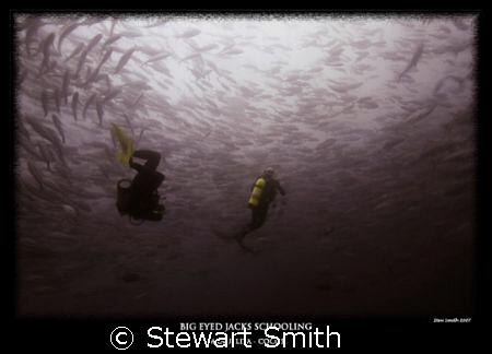 SCHOOLING BIG EYED JACKS by Stewart Smith