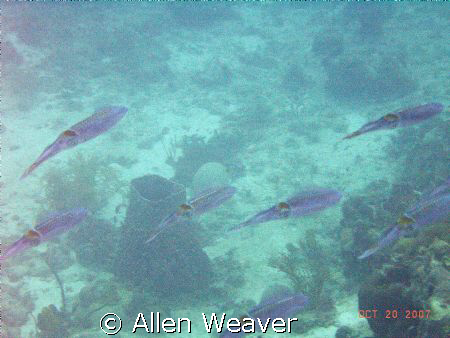 Shallow cloudy waters of Negril Jamaica. by Allen Weaver