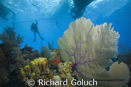 Safty stop by Richard Goluch