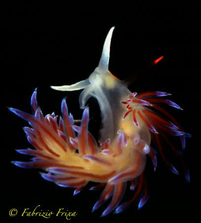 An example of elegance and fragility. 
