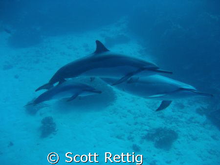 The Fam !  Mom, Dad, and the Little One off  Big Island o... by Scott Rettig