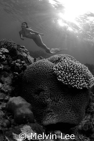 Mermaid by Melvin Lee