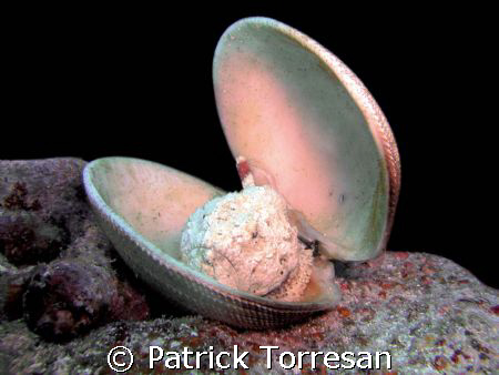 Fish in to the shell by Patrick Torresan