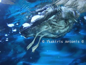 "A DeaD Sea-Gull.. ""Some say the end is near.."" by Antonis Tsakiris"