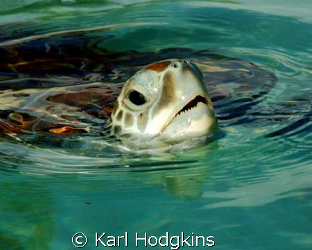 Just popping up to say Hello by Karl Hodgkins