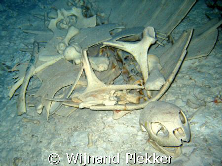 Turtle skeleton. Not an particulary good pic, but I want... by Wijnand Plekker