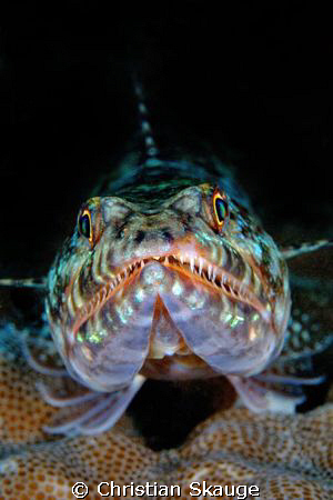 Lizardfish, up close and personal. Nikon D200 in Nexus ho... by Christian Skauge