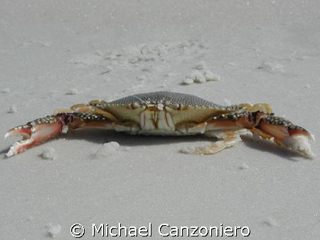 Crabby? Geez! Got a little sand kicked in my face; just m... by Michael Canzoniero