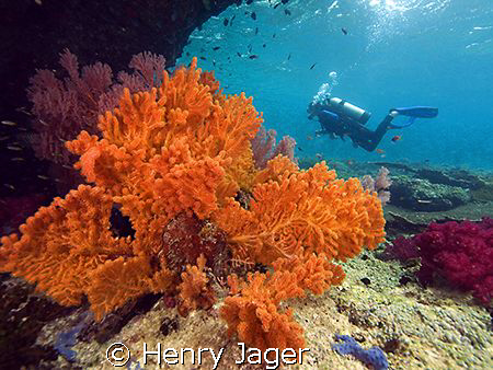 """Orange""  (Corals from Raja Ampat, West Papua) by Henry Jager"