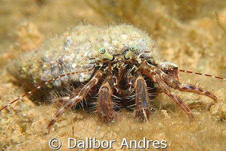 Hermit crab, EOS 350D, EF 28-80mm, Ewa-marine U-AXP by Dalibor Andres