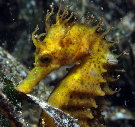check the head, there is a small shrimp! and check its ba... by Andy Kutsch